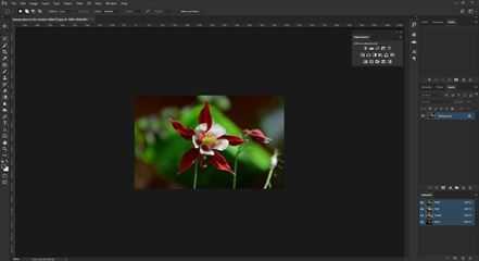 Voorbeeldfoto bloem kleuraanpassing