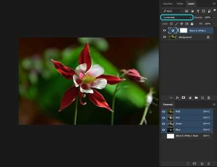 Voorbeeldfoto2 bloem kleuraanpassing